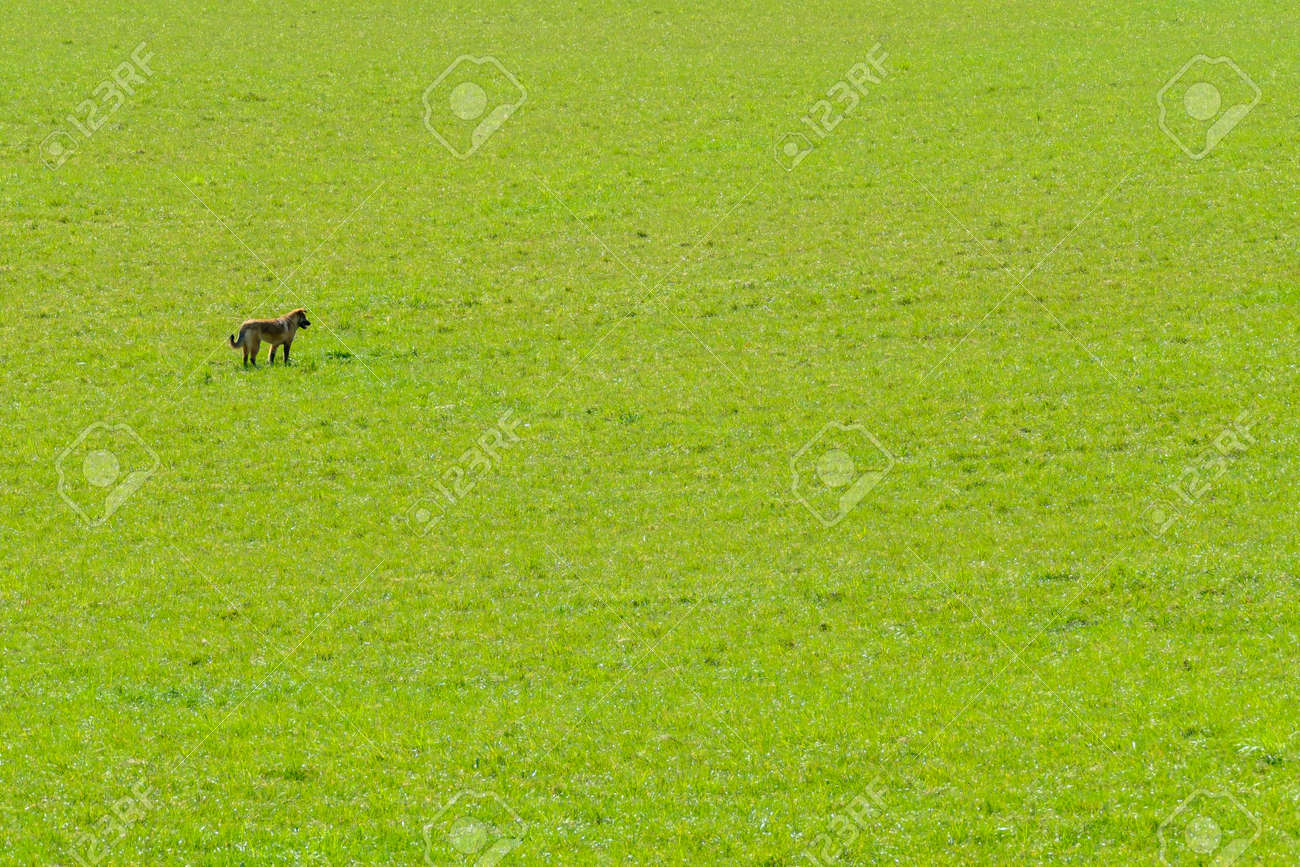 Dog standing in field on sunny day - 170229542