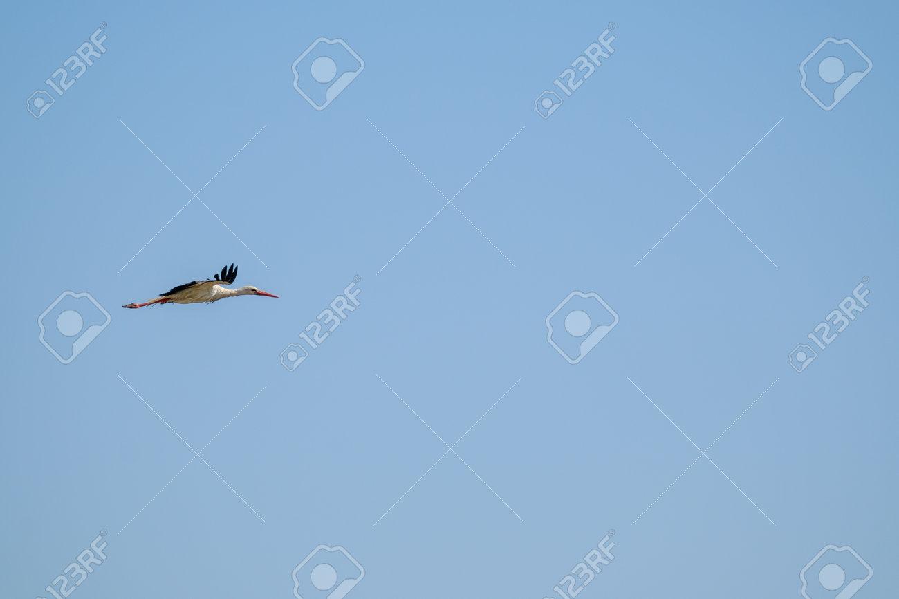 Stork flying in blue sky - 170229545