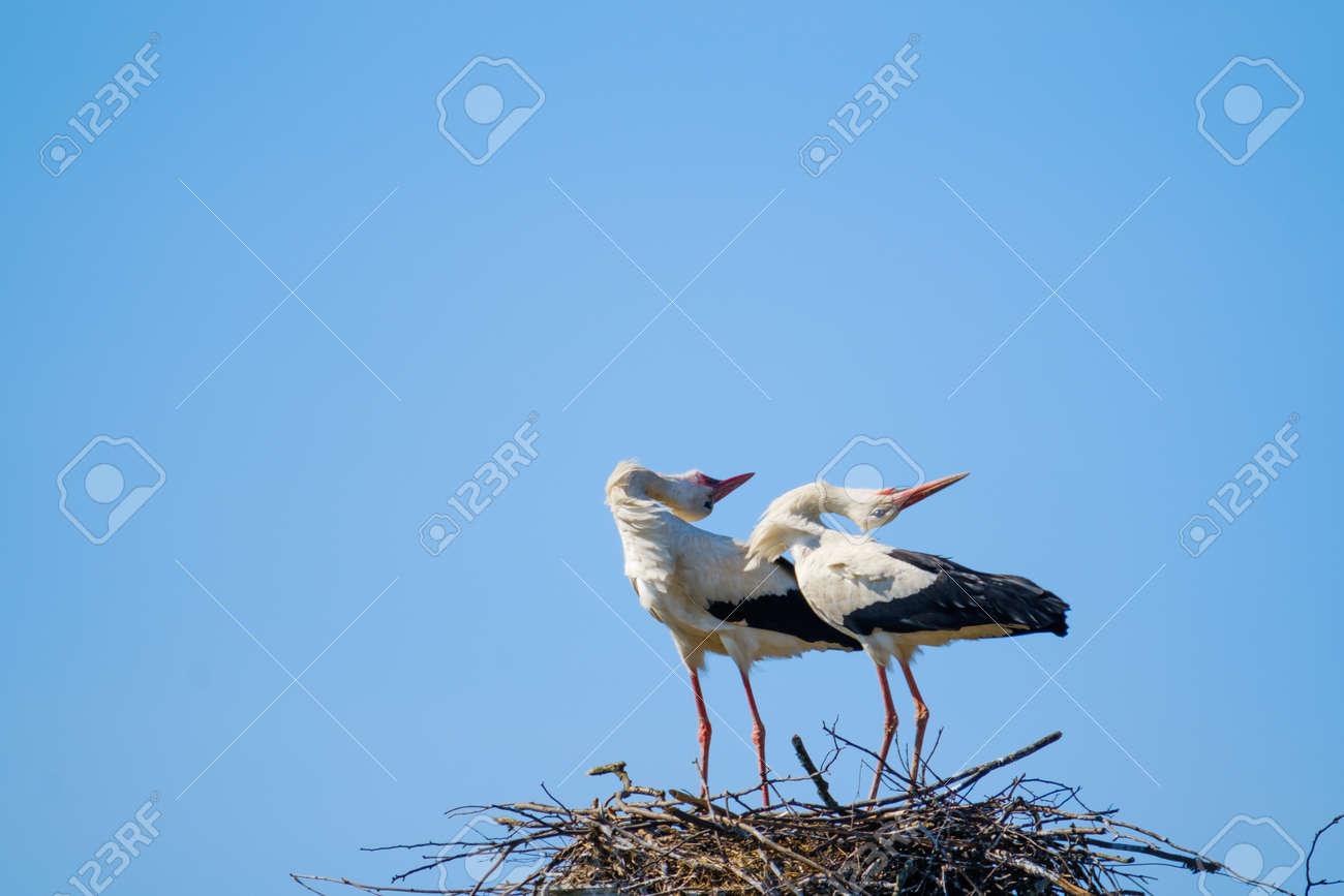 Graceful storks bending against blue sky - 170229547