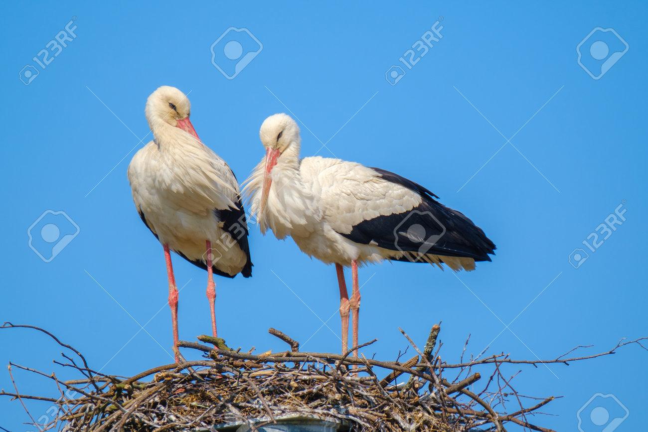 Storks standing in nest on sunny day in summer - 170229605