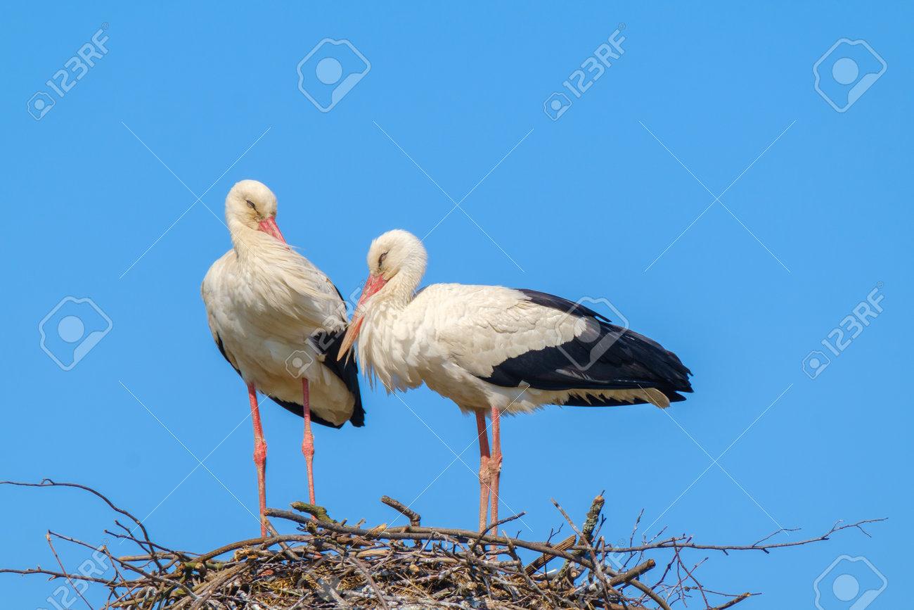 Storks standing in nest on sunny day in summer - 170146780