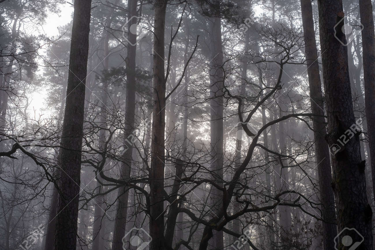 Trees growing in forest in foggy morning - 169973072