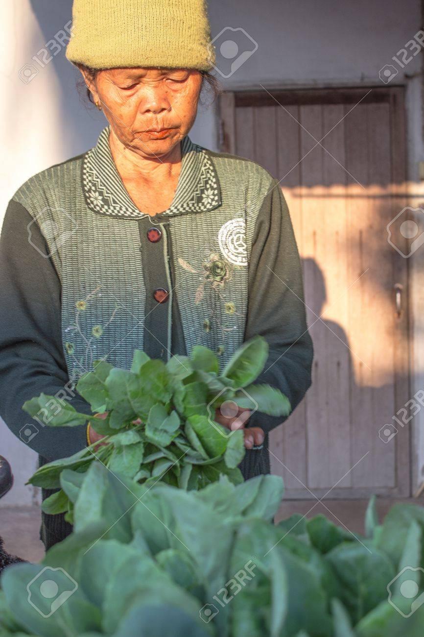 Le Jardin Potager En Janvier surin thaÏlande-janvier 23, les d'une femme non identifiée debout dans un  jardin potager à planter et vendu le 23 janvier, 2013 surin, thaïlande