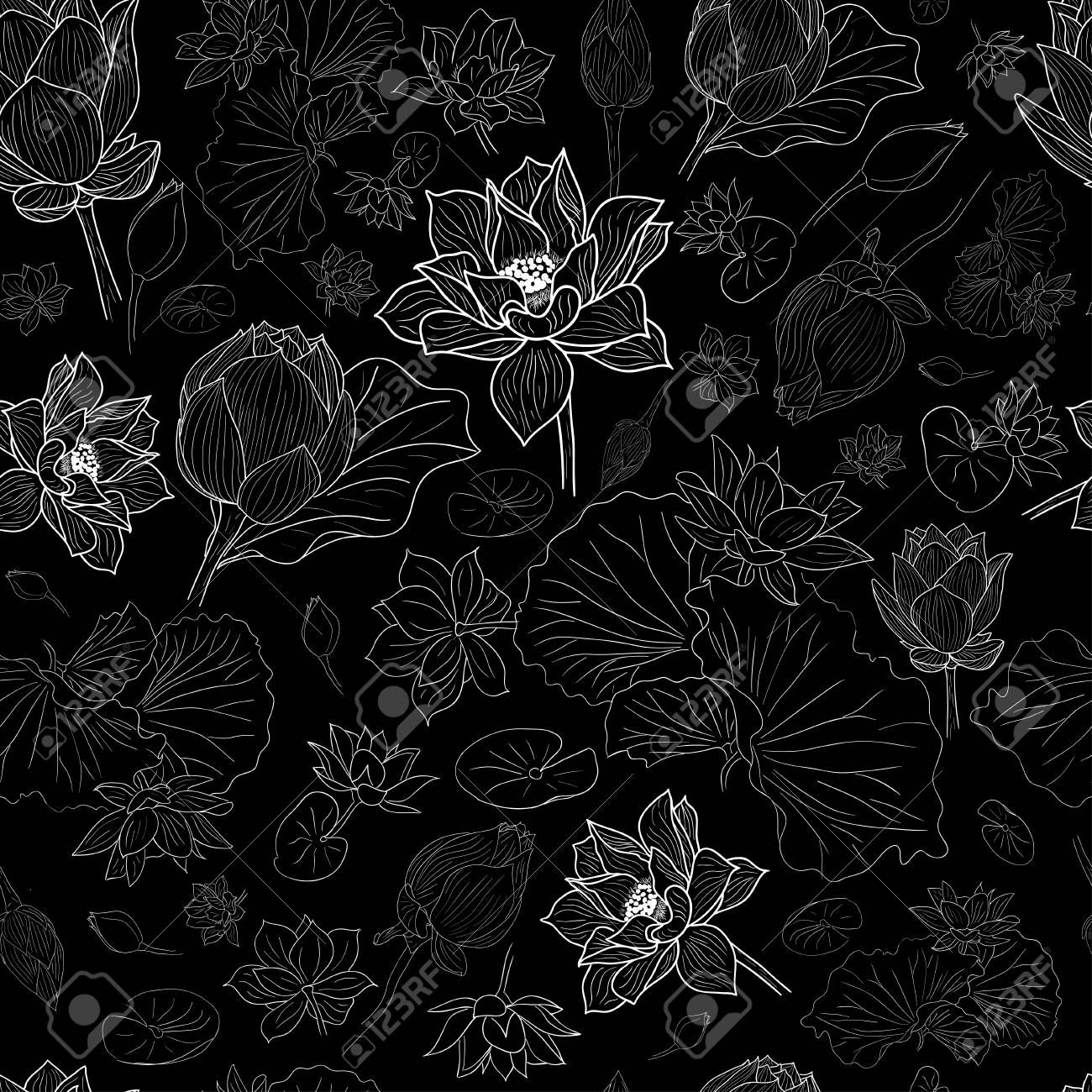 White Line Lotus Flowers Pattern Background On Black Eps10 Royalty