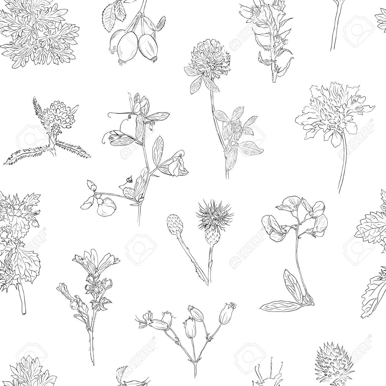 Wildflowers and berries seamless pattern  Dogrose, burdock, herbs