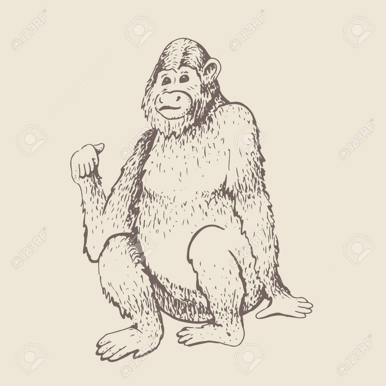 Monkey vector illustration hand drawn sketch of young orangutan smile monkey is sitting