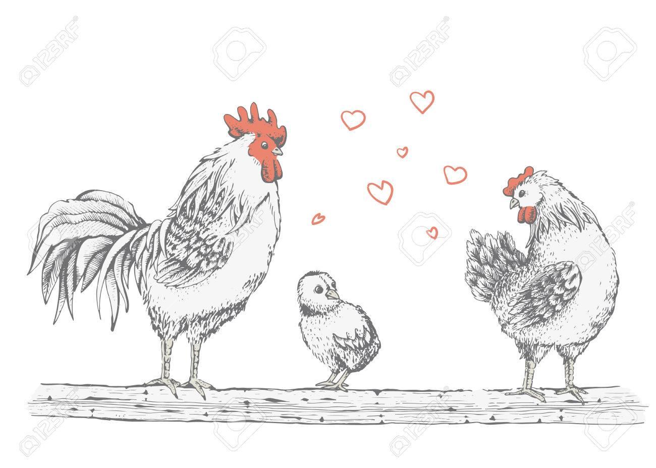 Illustration Coq Croquis Poussin Et Couveuses Serie D Animaux