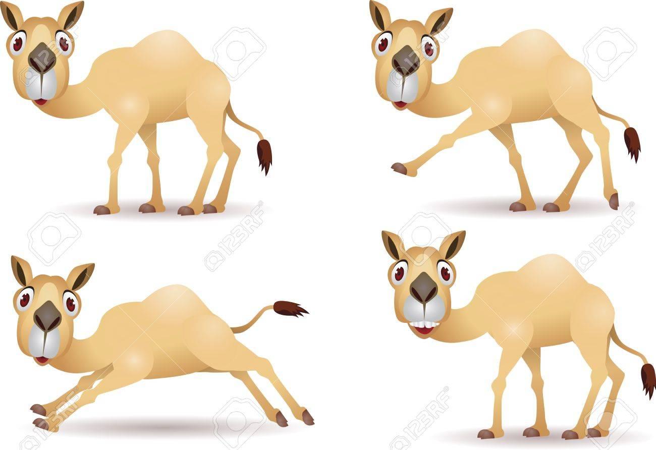100 camel pictures funny camel ki qurbani ka sunnat tareeqa