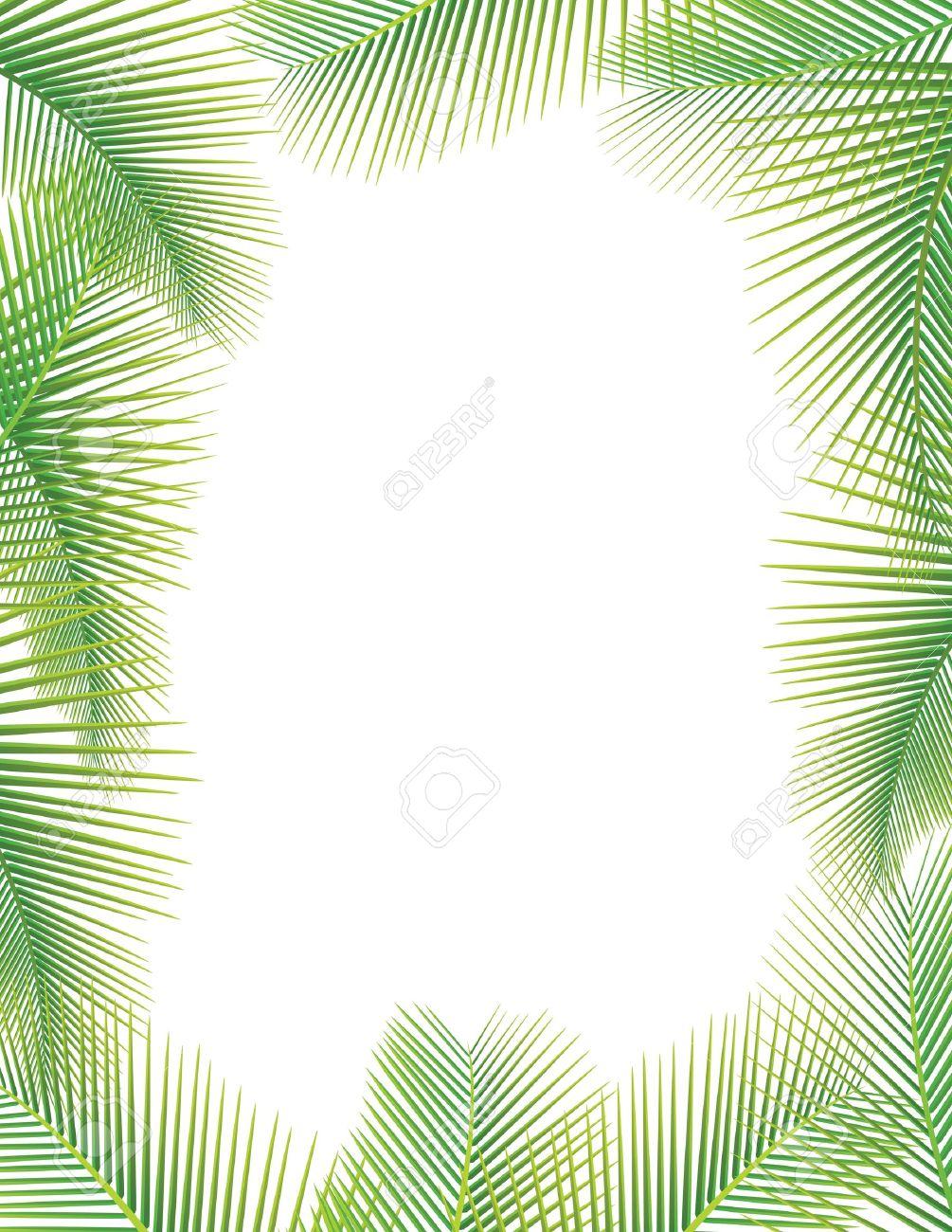 coconut leaf images u0026 stock pictures royalty free coconut leaf
