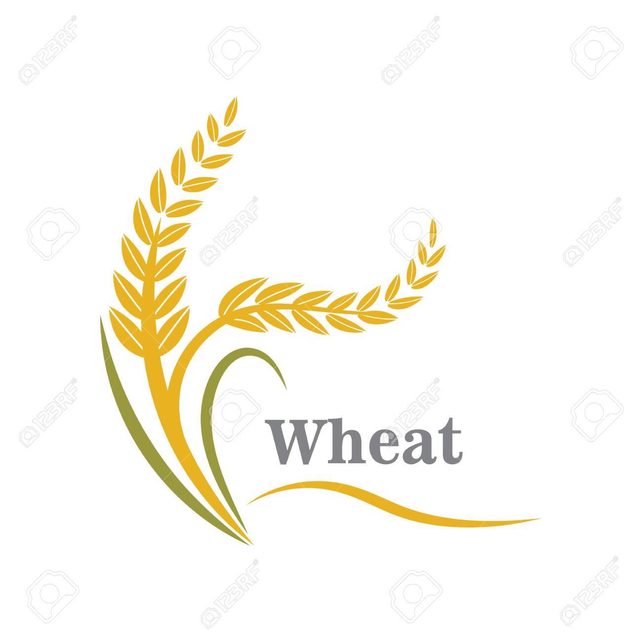 Agriculture wheat logo or symbol icon design illustration - 146115827