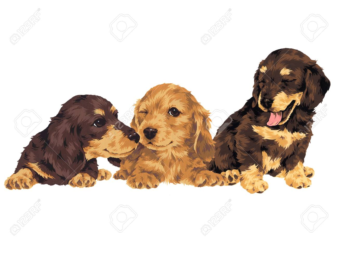 puppy Stock Photo - 20492914
