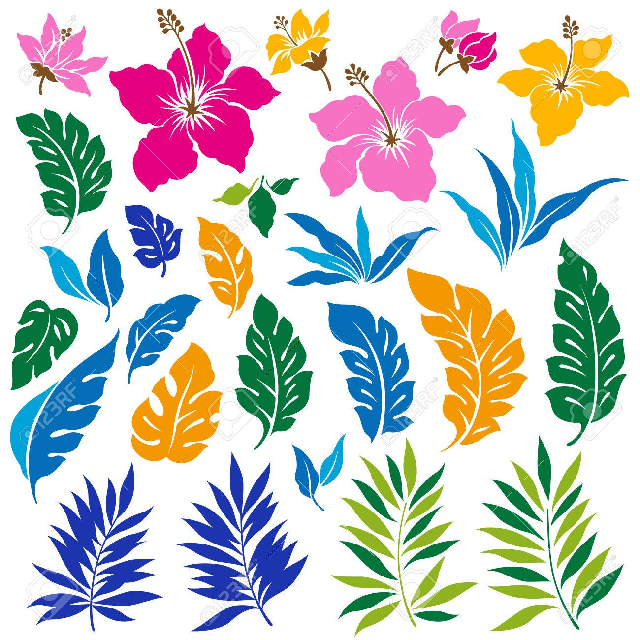 Tropical Flower Illustration Royalty Free Cliparts Vectors And Stock Illustration Image 57175852