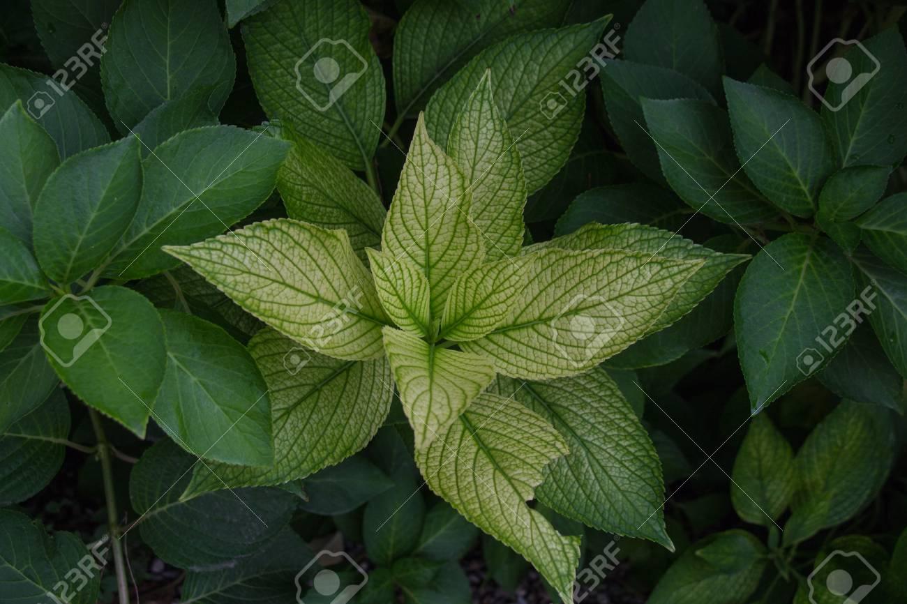 La vista di un ramo verde di una pianta da giardino foto royalty