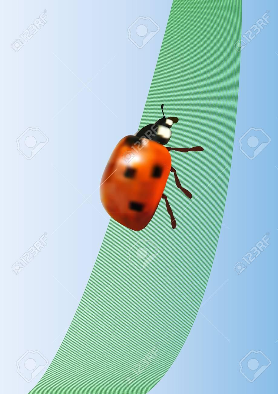 vector ladybird on the leaf Stock Vector - 11578553