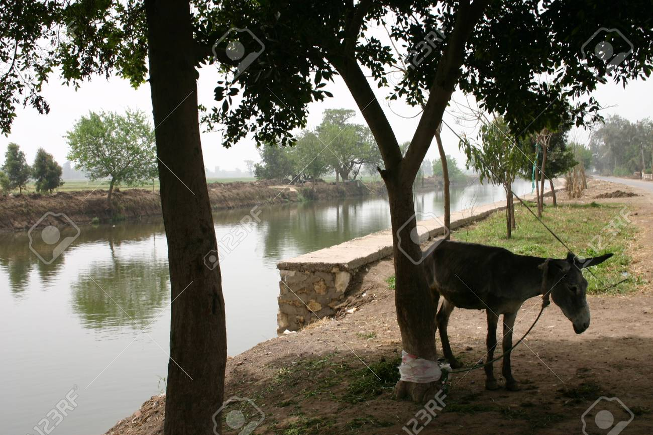 The Nile in the Farmlands of the Eastern Province of Egypt Stock Photo - 868664
