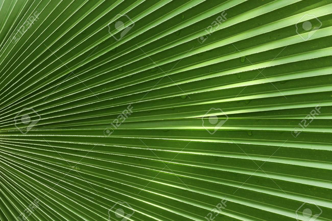 Patrón De La Hoja Tropical - Simetría De La Naturaleza Fotos ...