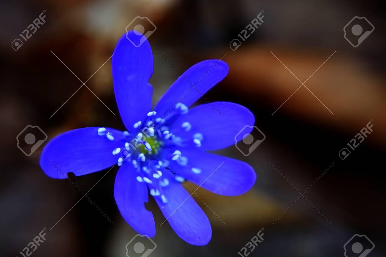 tavasz,virág, kék,makro, mezei - 39417883