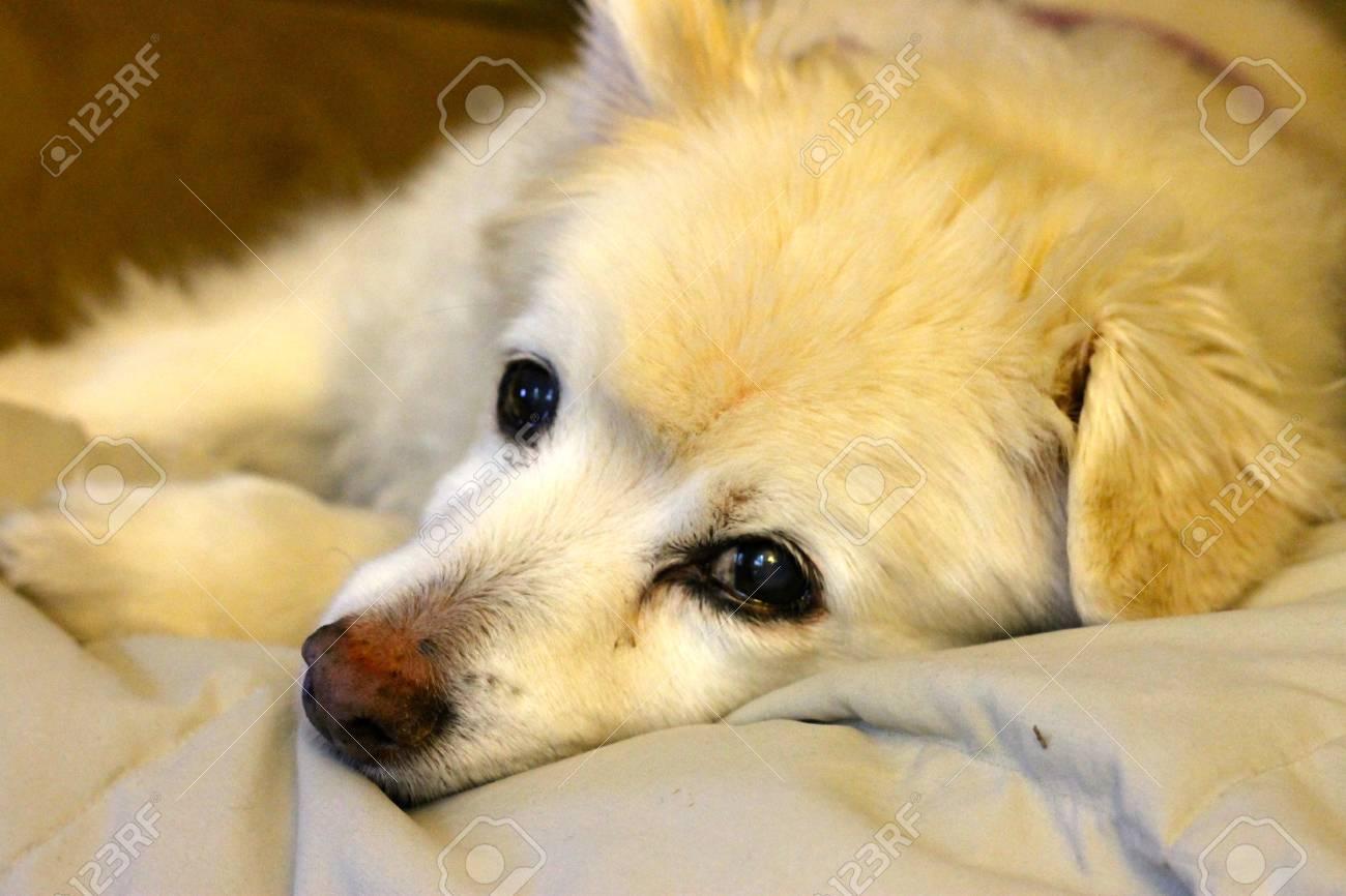 犬の壁紙を救出します の写真素材 画像素材 Image 83554375