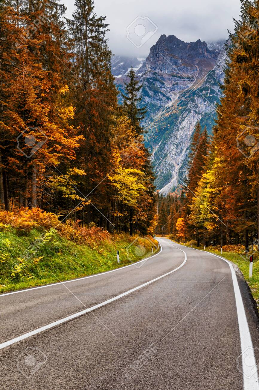 View of winding road. Asphalt roads in the Italian Alps in South Tyrol, during autumn season. Autumn scene with curved road and yellow larches from both sides in alp forest. Dolomite Alps. Italy - 142068329