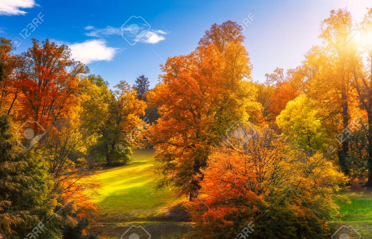 Golden autumn scene in a park, with falling leaves, the sun shining through the trees and blue sky. Colorful foliage in the park, falling leaves natural background - 168255594