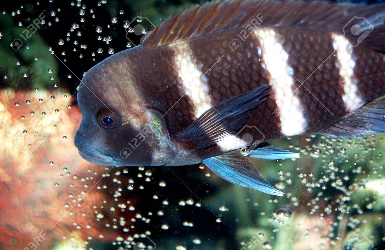 Charmant Färben Von Fischen Fotos - Malvorlagen Von Tieren - ngadi.info