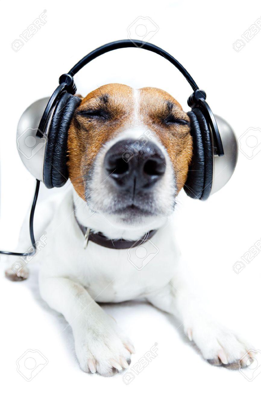 dog listening music with headphones Stock Photo - 11993933