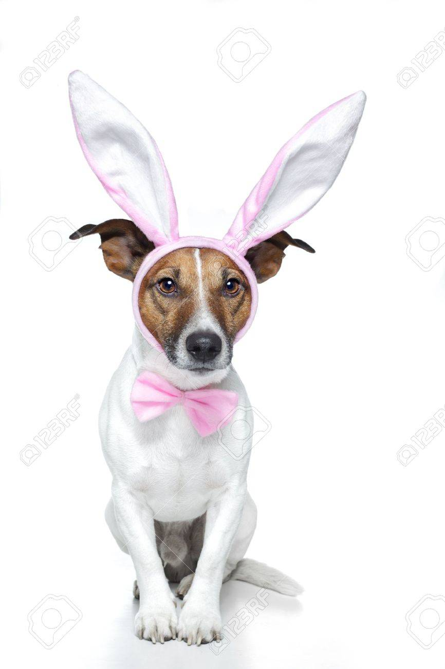 dog dressed as a easter bunny Stock Photo - 11993937
