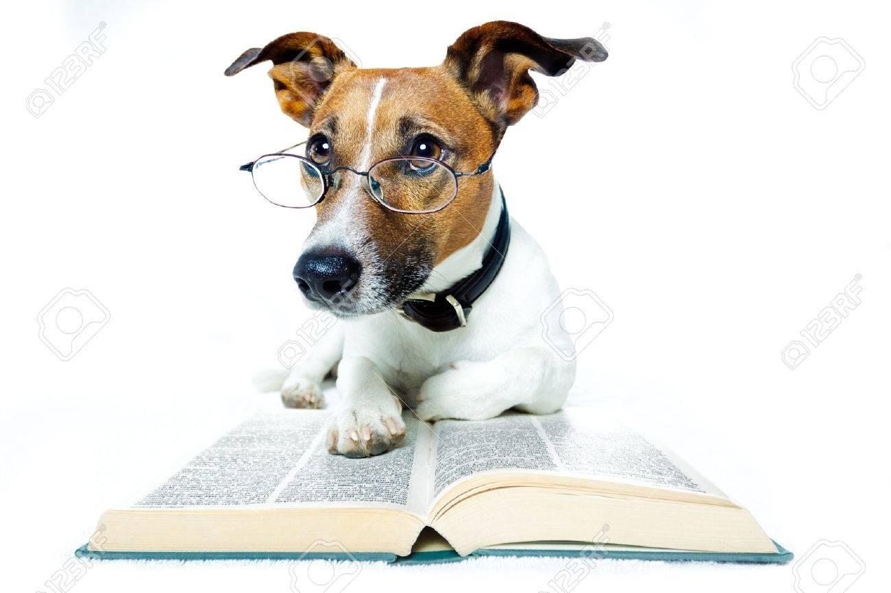 dog reading books - 12009577