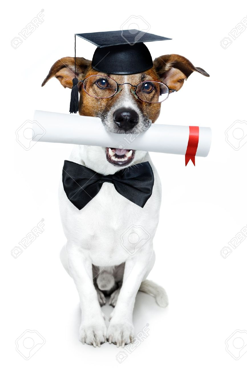 dog with diploma and graduated Stock Photo - 12215397
