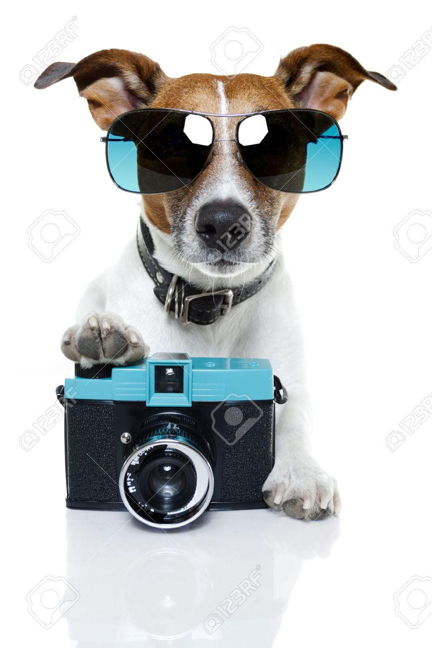 dog with blue shades taking a photo with camera Stock Photo - 12470753