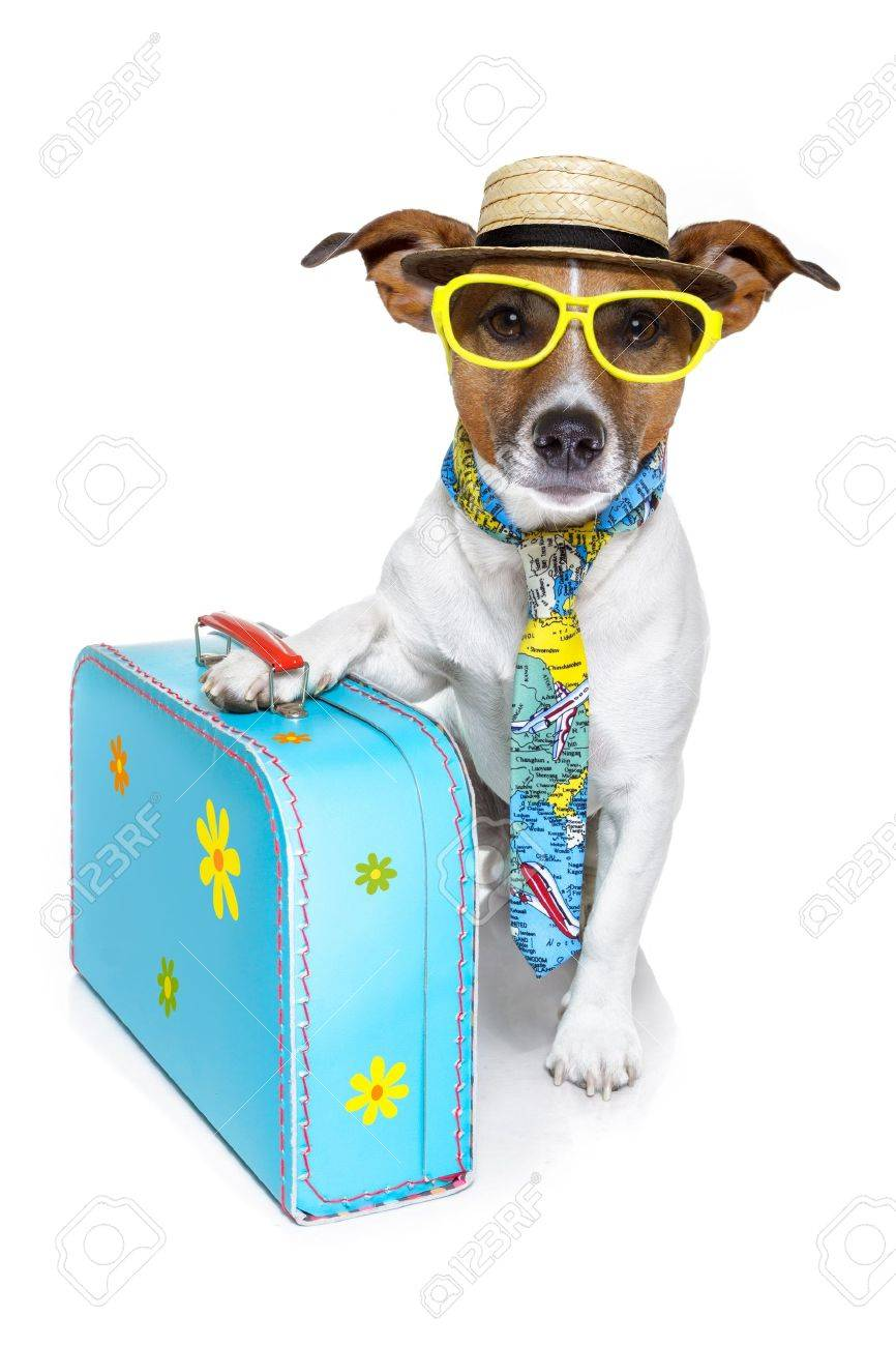 dog dressed up as a tourist Stock Photo - 12810396