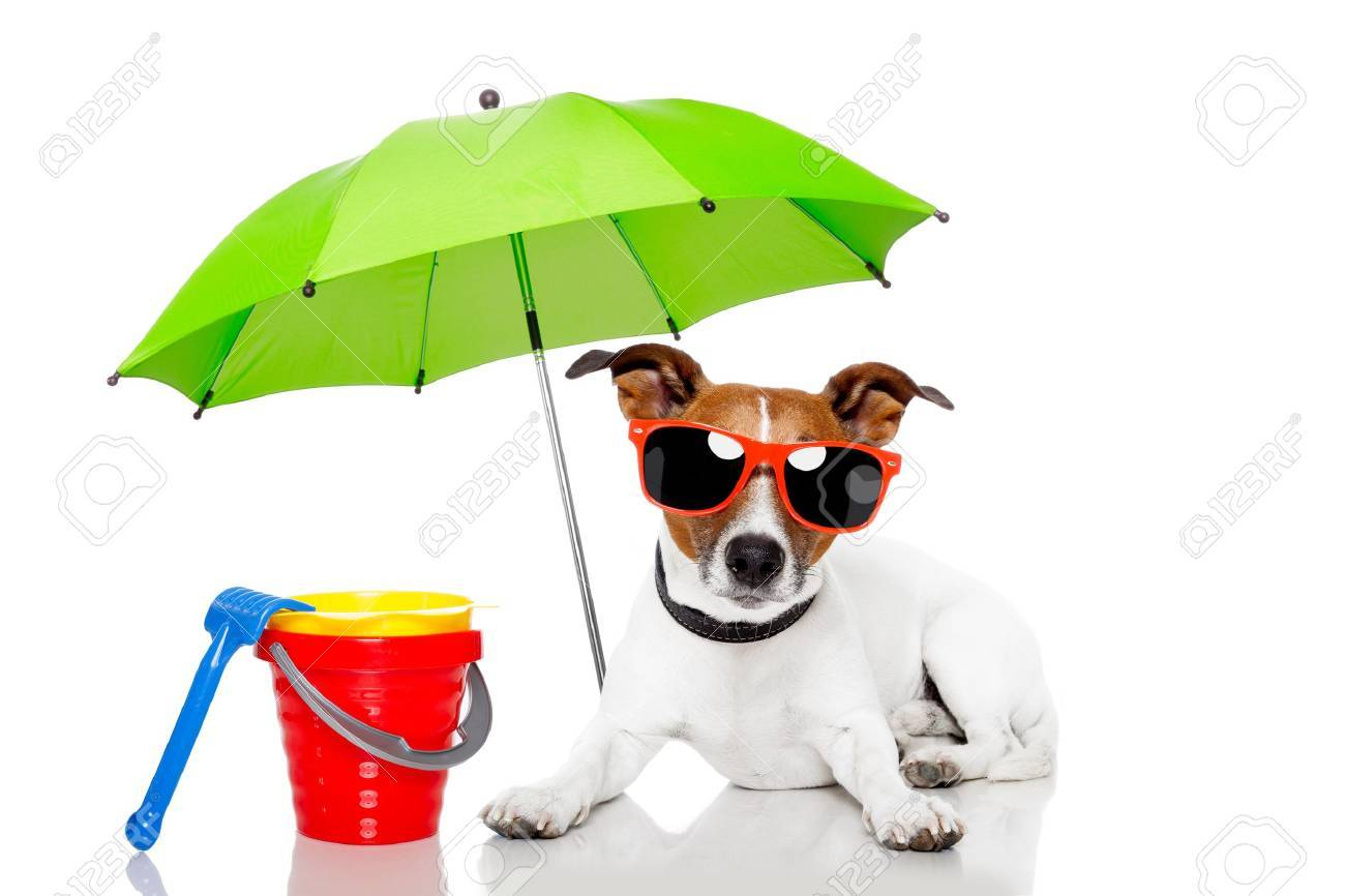 Dog with beach accessories Stock Photo - 13060957