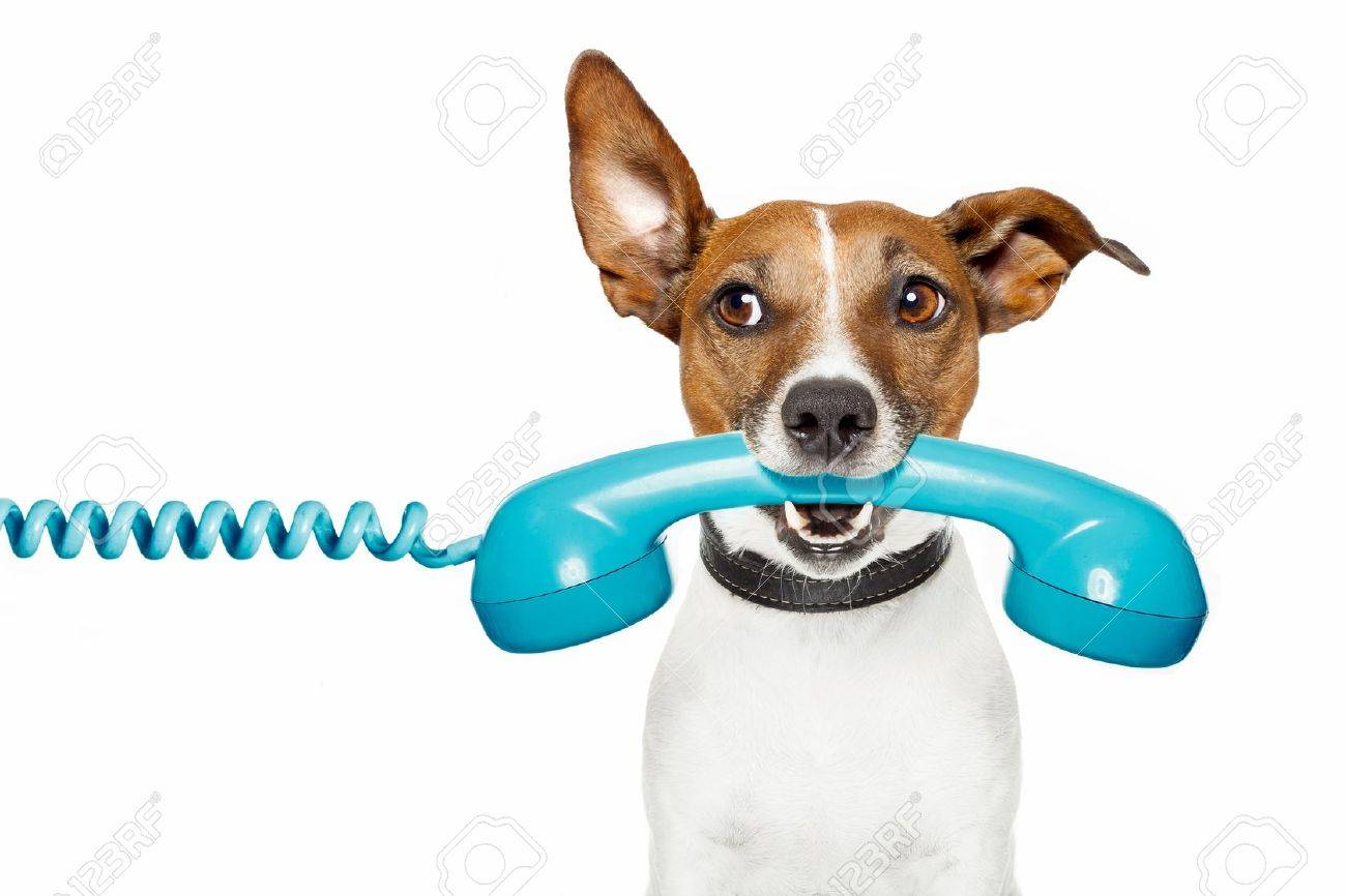 dog on the phone and listening Stock Photo - 13060936