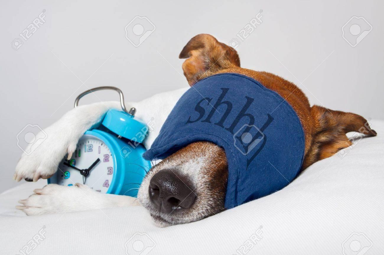 dog with alarm clock and sleeping - 13169067