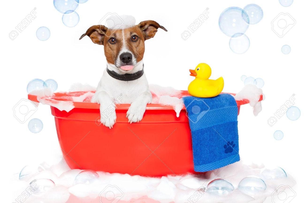 archivio fotografico dog fare un bagno in una vasca da bagno colorato con una papera di plastica