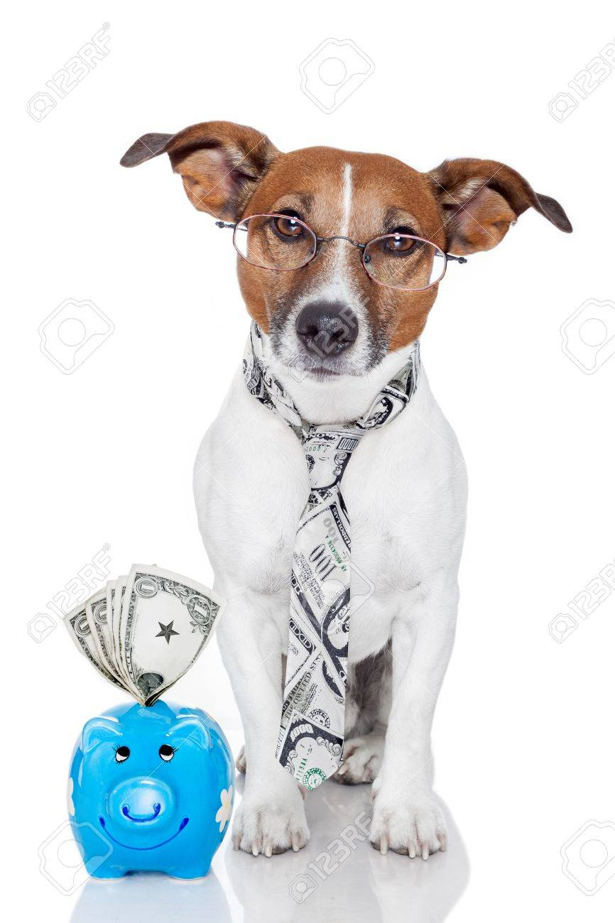 dog with piggy bank Stock Photo - 13522082