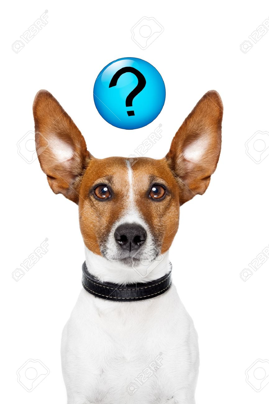 Dog asking  with a question mark on top Stock Photo - 14098767