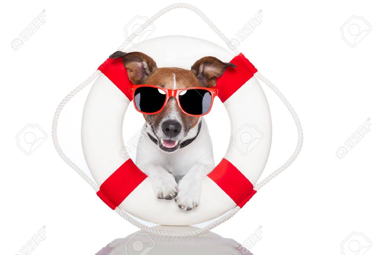 dog with red and white lifesaver and a hat Stock Photo - 14098772