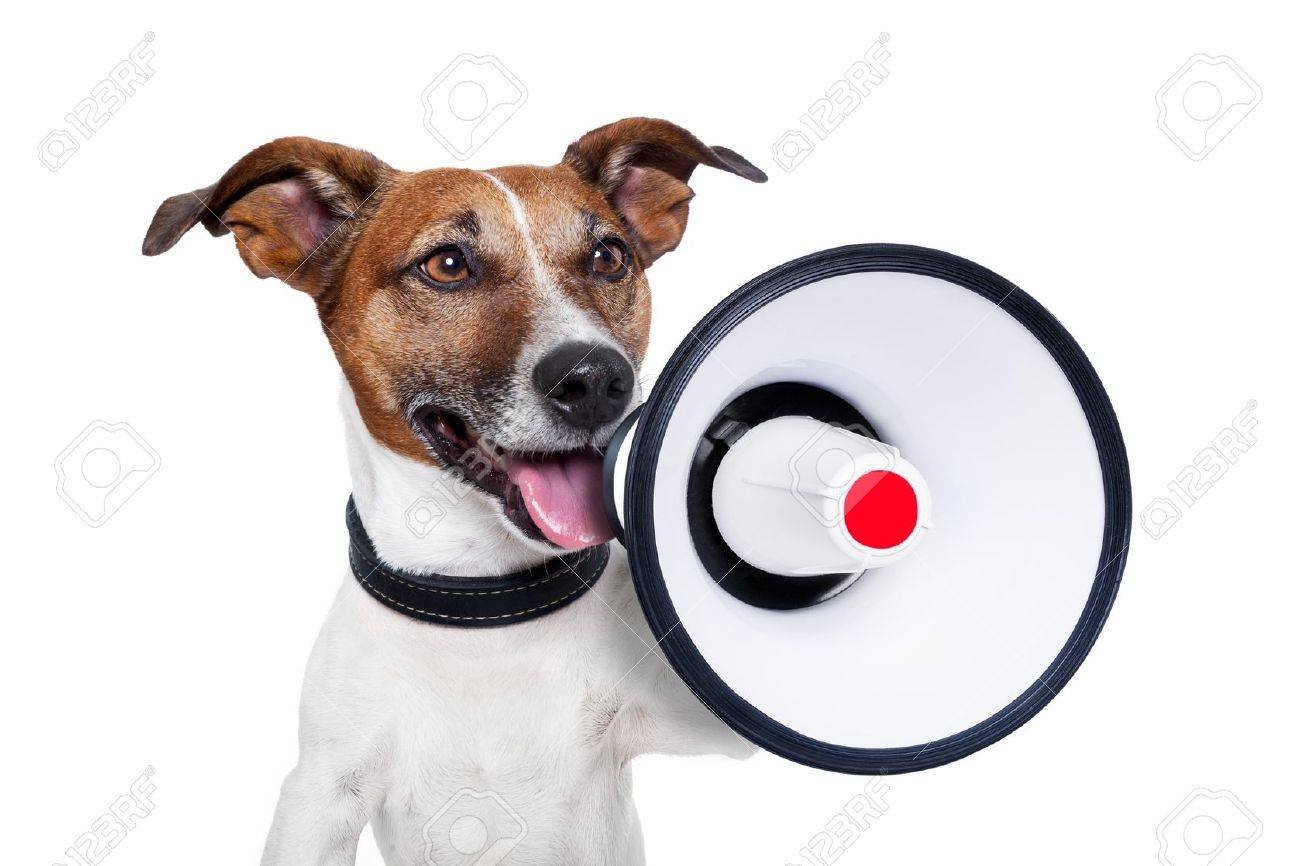 dog shouting into a white and red megaphone Stock Photo - 14098775