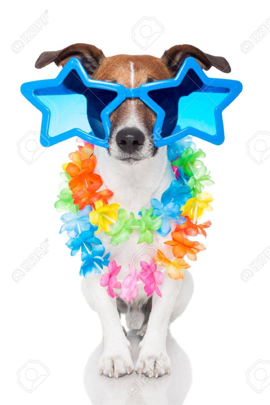 dog with glasses - 14247798