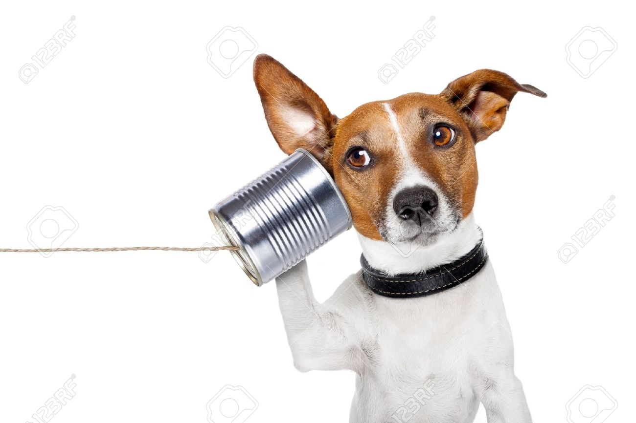 dog on the phone with a can - 14303452