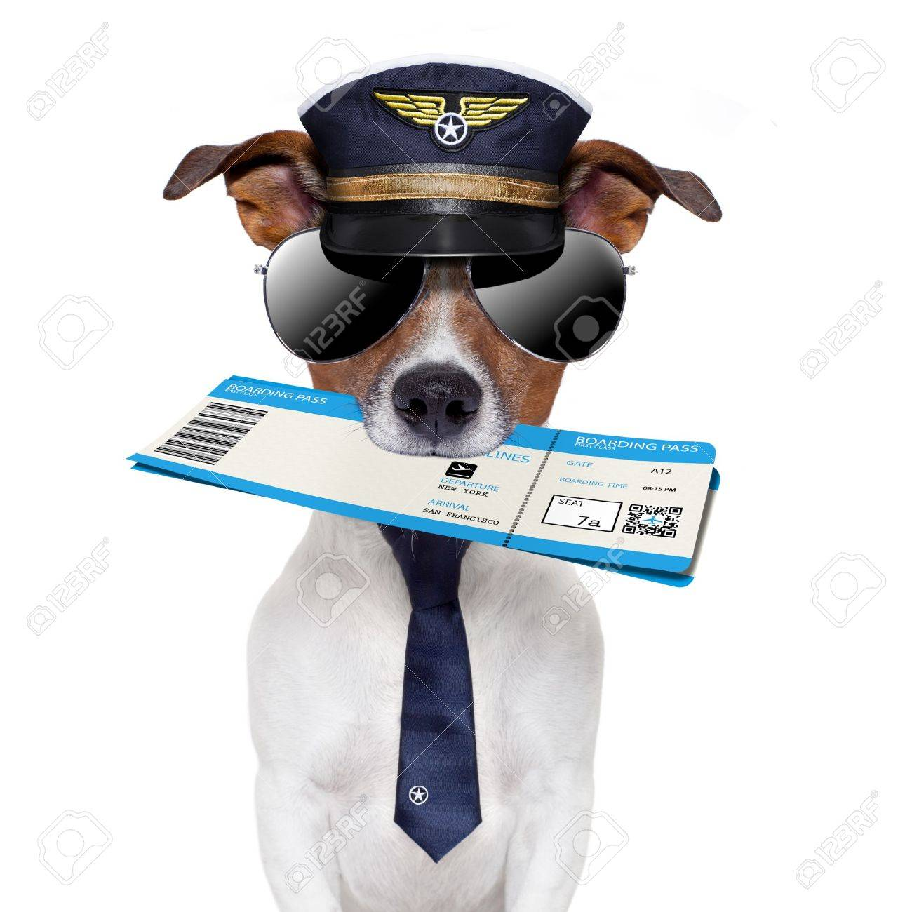 boarding pass dog  with hat and tie Stock Photo - 14594090