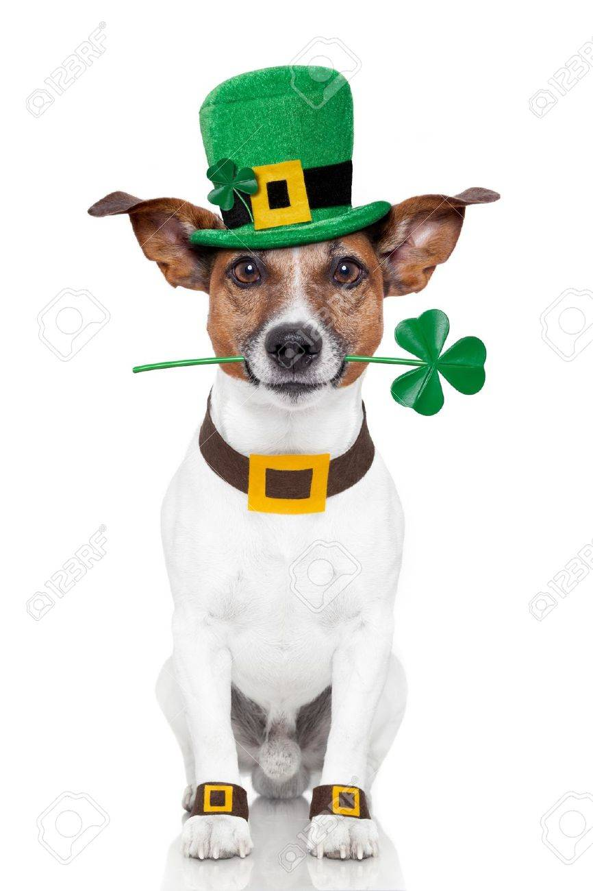 Image result for st patrick dog
