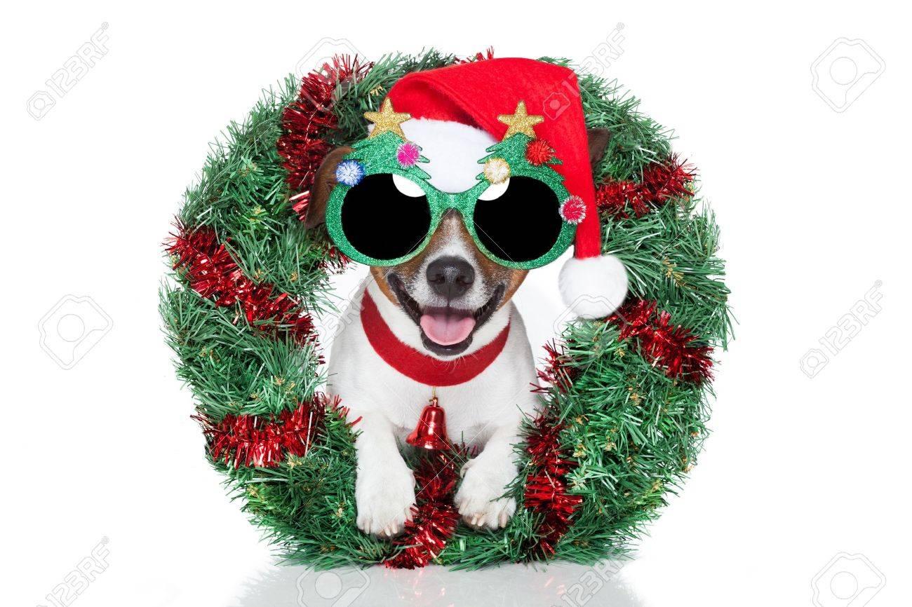 xmas dog with funny sunglasses Stock Photo - 14821281