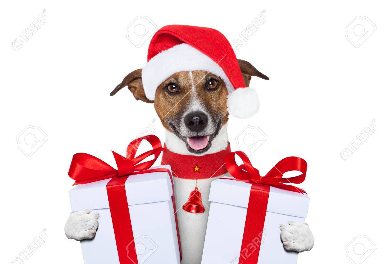 santa christmas dog with gifts Stock Photo - 14919202