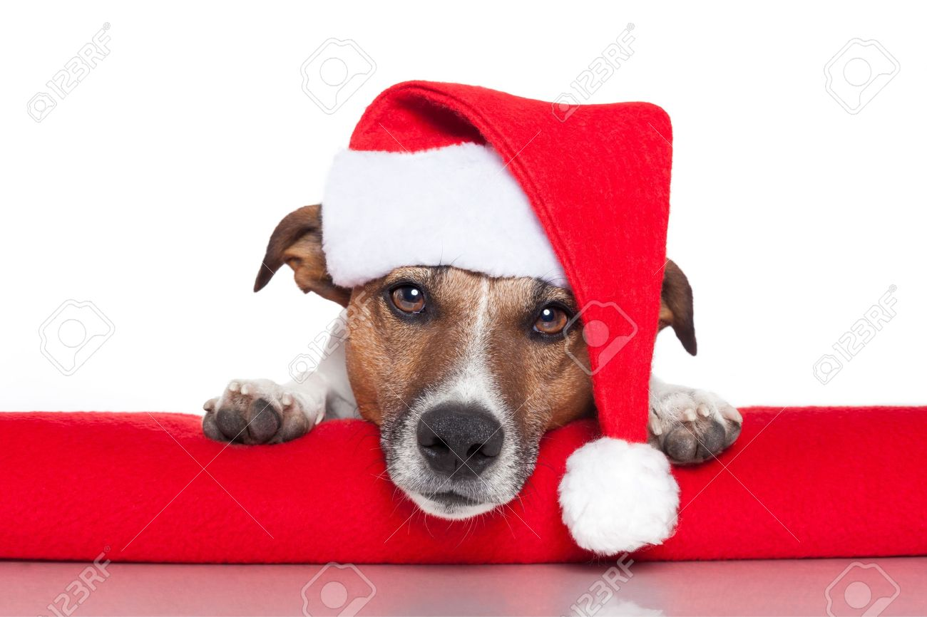 Christmas Dog Santa Baby Red Hat Stock Photo, Picture And Royalty ...
