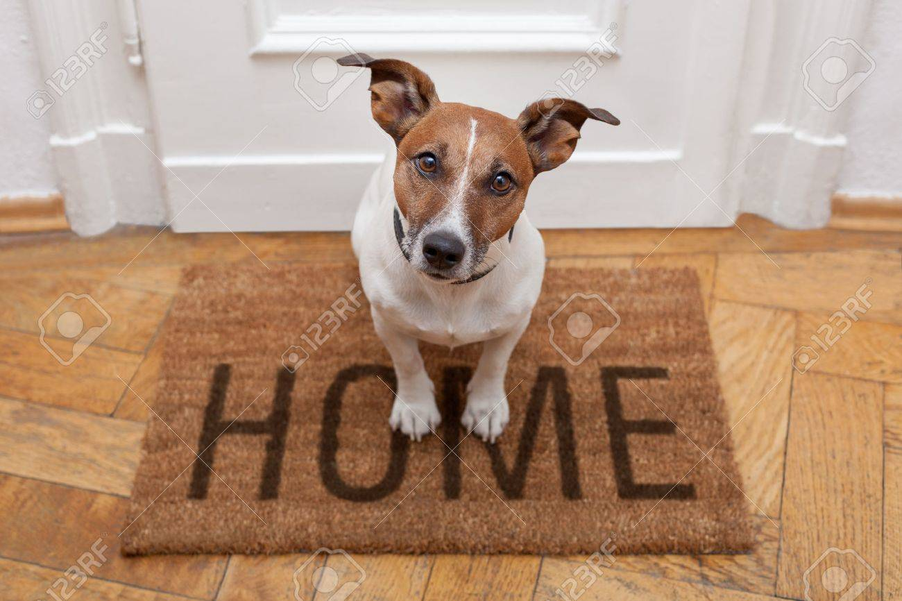 dog welcome home on brown mat - 15377316