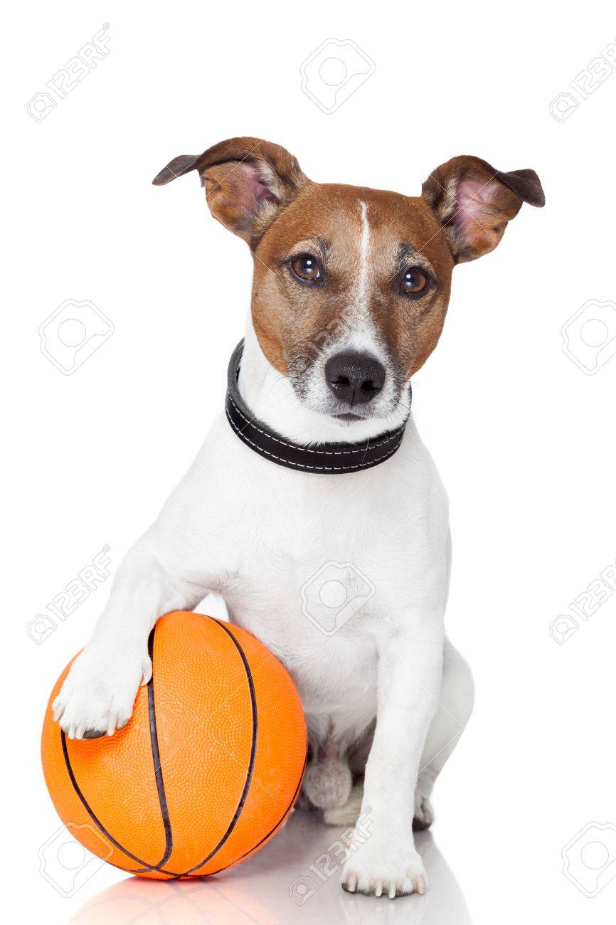 Tennis ball mascot stock photos tennis ball mascot stock photography - Racket Mascot Basket Ball Winner Dog Stock Photo