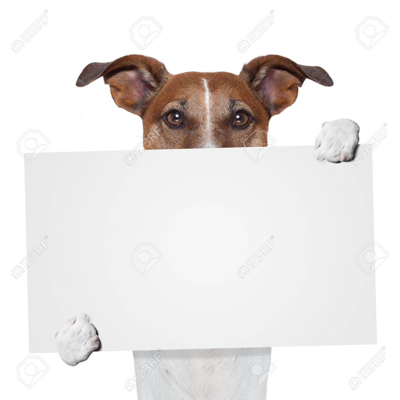 placeholder banner dog Stock Photo - 15552000