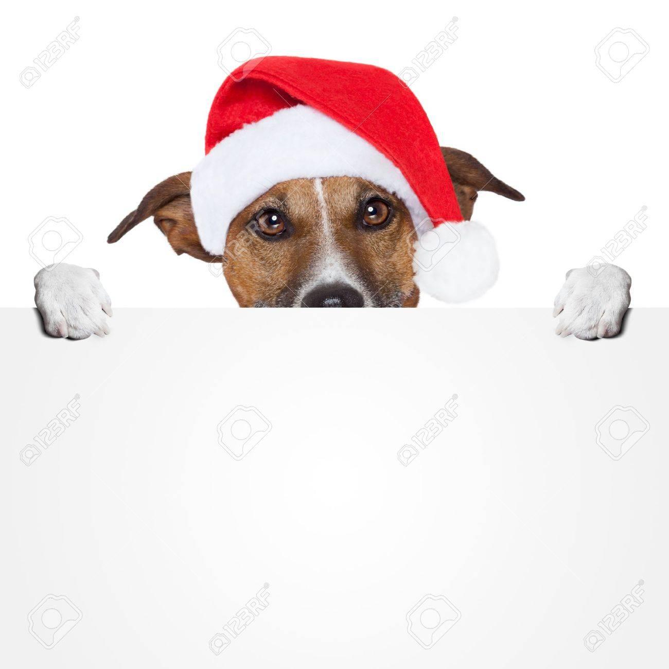 christmas banner placeholder dog Stock Photo - 15551998